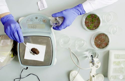 The scientist's hands weighing soil sample