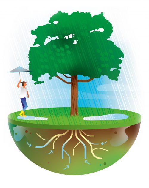 bomen nemen water op