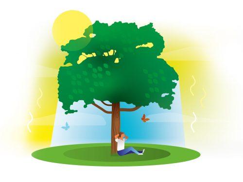 Bomen geven verkoeling
