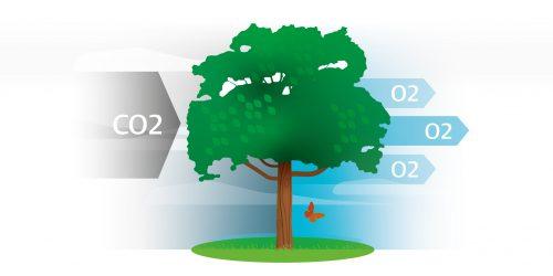 bomen nemen co2 op