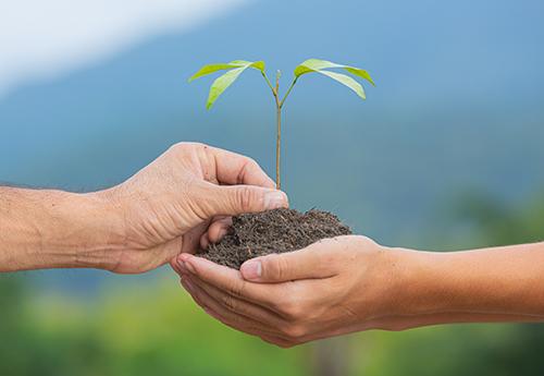 Geef-een-boom